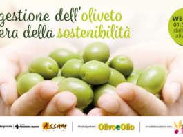 Webinar: La gestione dell'oliveto nell'era della sostenibilità